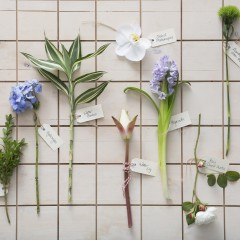 flower stems bloom college hydrangea, orchid, hyacinth, david austin rose, water lily, english box, water bamboo, green trick carnation