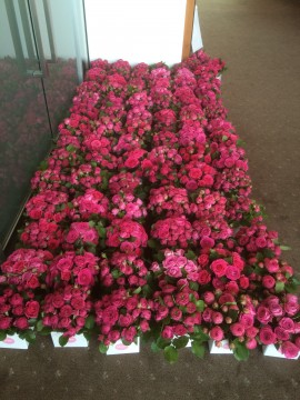 Flowers for breast cancer foundation