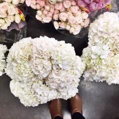 floristry melbourne geelong