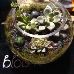 terrarium bloom college