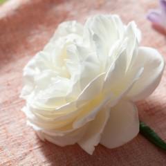 Bloom College rose