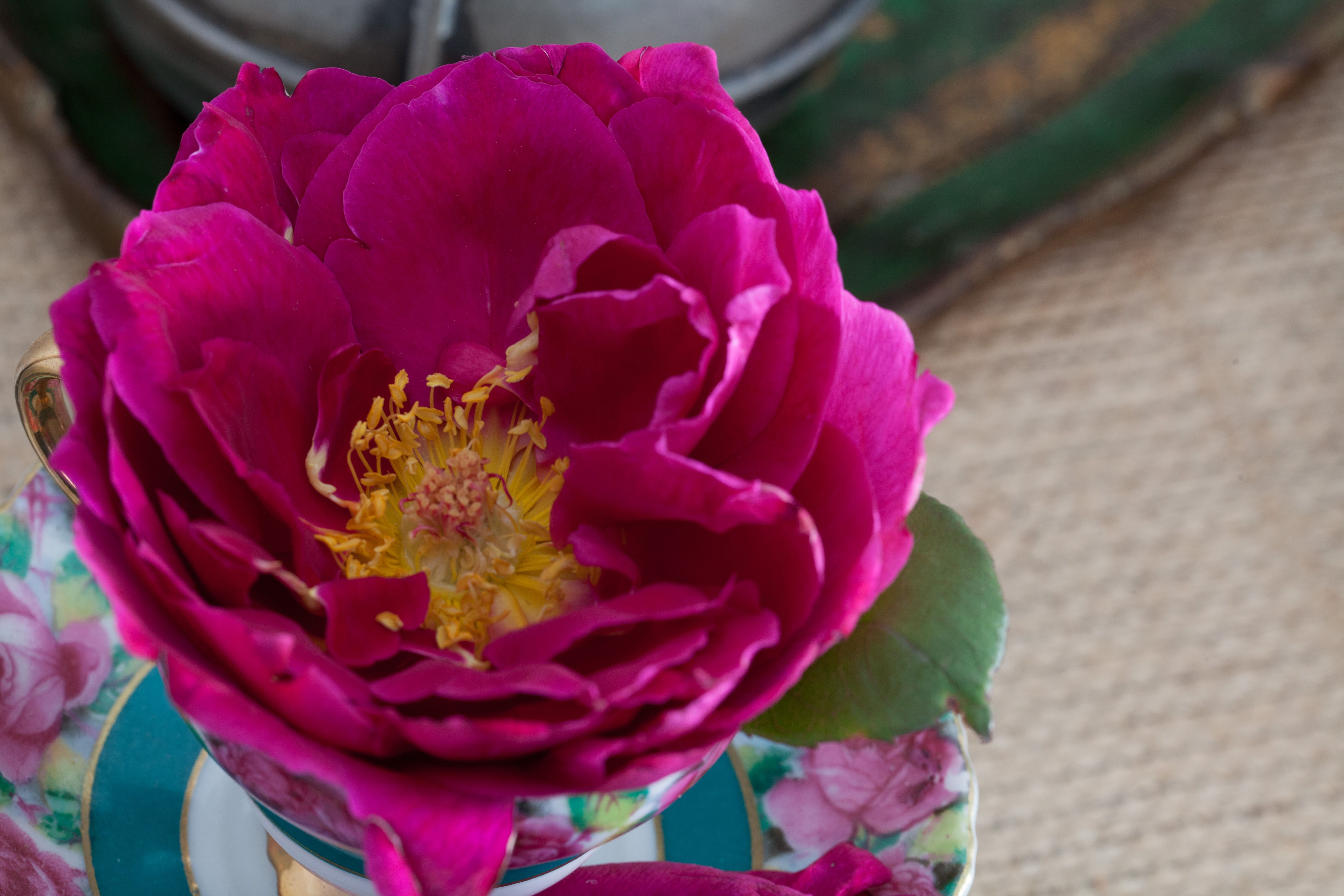 Floristry Basics: Colour Theory | Bloom College