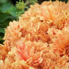 flower workshops geelong
