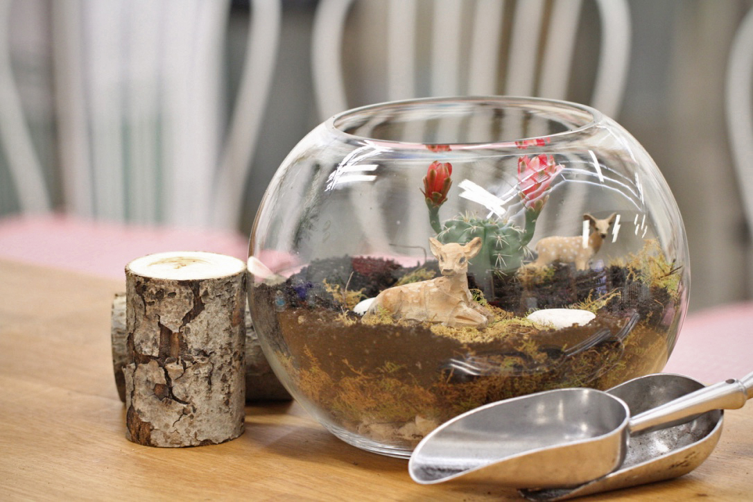 Make A Professional Glass Fish Bowl Terrarium Bloom College